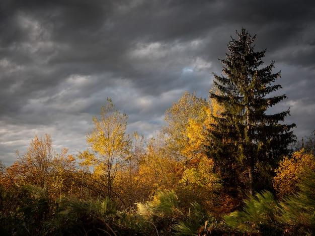 Schöner schuss von gelben und grünblättrigen bäumen mit einem bewölkten himmel in der