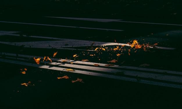 Schöner schuss von gelben verwelkten blättern auf der straße