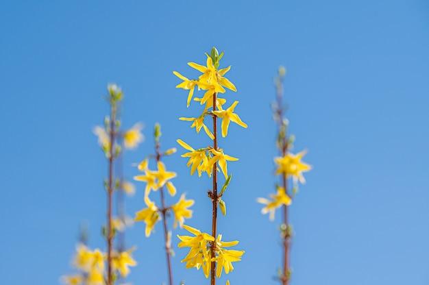 Schöner schuss von gelben wildblumen