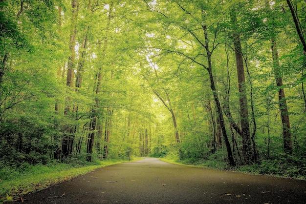 Schöner schuss von grün und wäldern im wald