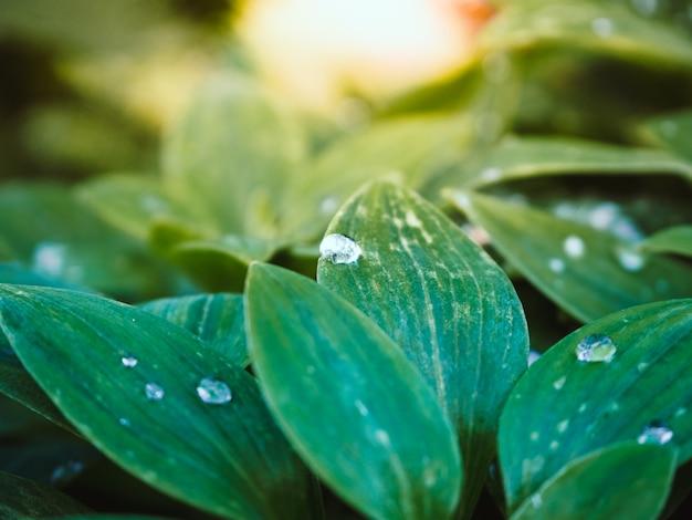 Schöner schuss von grünen pflanzen mit wassertropfen auf den blättern im park an einem sonnigen tag