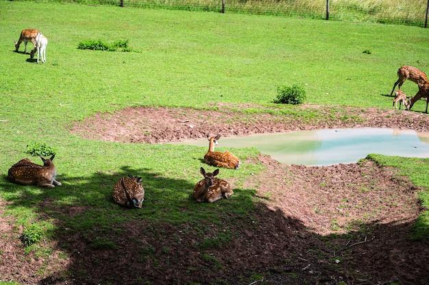 Schöner schuss von hirschen auf grünem gras im zoo an einem sonnigen tag Kostenlose Fotos