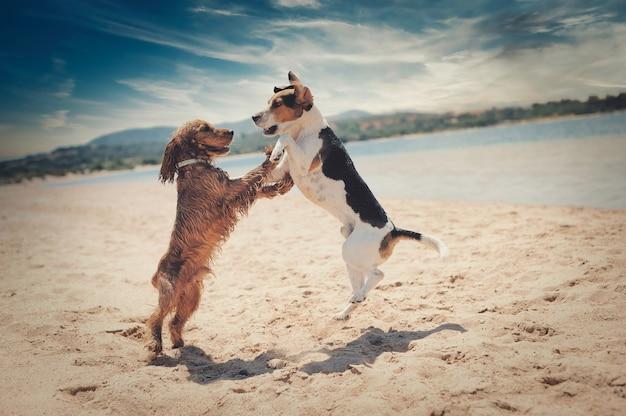 Schöner schuss von hunden, die an einem strand tanzen