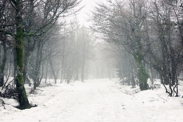 Schöner schuss von kahlen bäumen in einem wald mit einem boden, der im winter mit schnee bedeckt wird