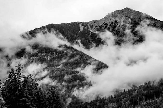 Schöner schuss von nebligen bergen in einem wald