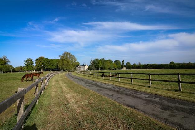 Schöner schuss von pferden, die auf der ranch in der landschaft hängen