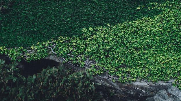 Schöner schuss von pflanzen, die auf einem felsen mit zweigen an einem sonnigen tag wachsen