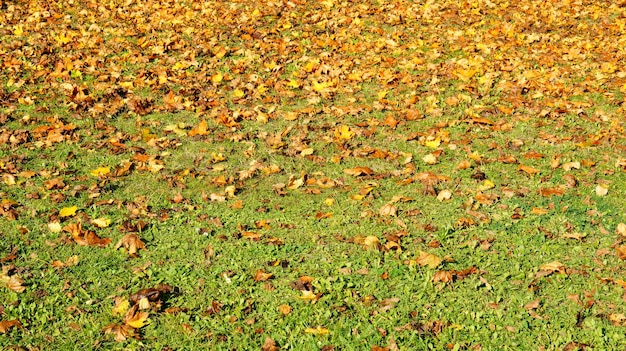 Schöner schuss von trockenen blättern auf dem grasboden