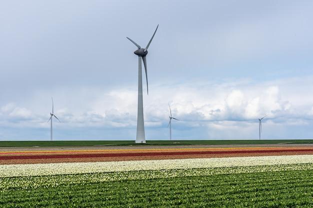 Schöner schuss von windmühlen in einem feld mit einem bewölkten und blauen himmel