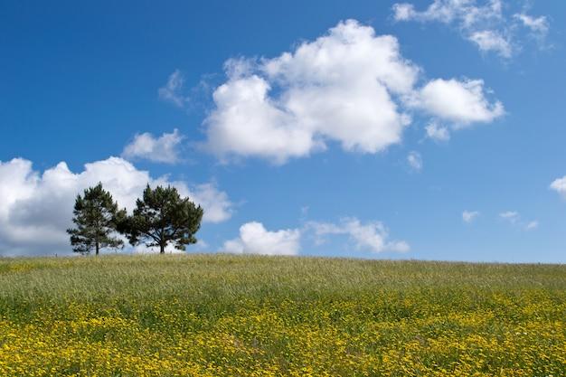Schöner schuss von zwei bäumen, die in einer grünen wiese wachsen