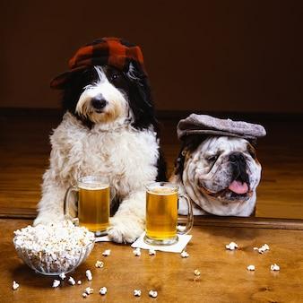 Schöner schuss von zwei hunden, die einen hut mit einem becher bier und einer schüssel popcorn auf einem tisch tragen