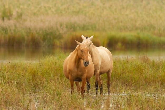Schöner schuss von zwei pferden in einem feld