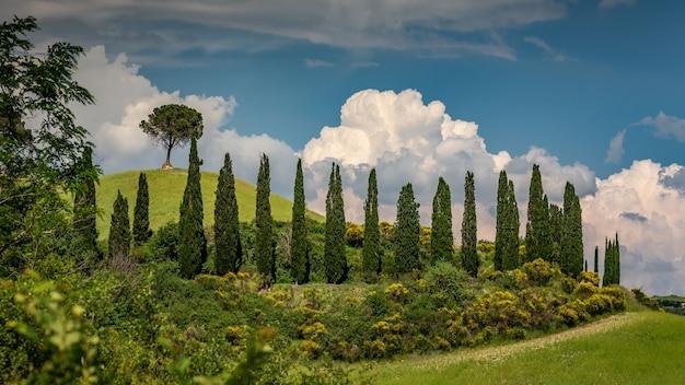 Schöner schuss von zypressen, umgeben von grünen pflanzen