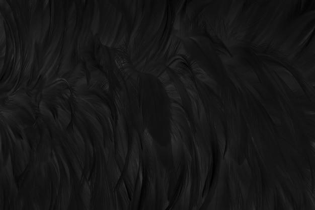 Schöner schwarzer grauer vogelfedernbeschaffenheitshintergrund.