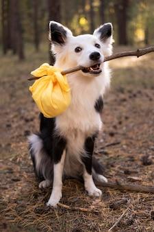 Schöner schwarzweiss-hund, der einen stock mit tasche hält