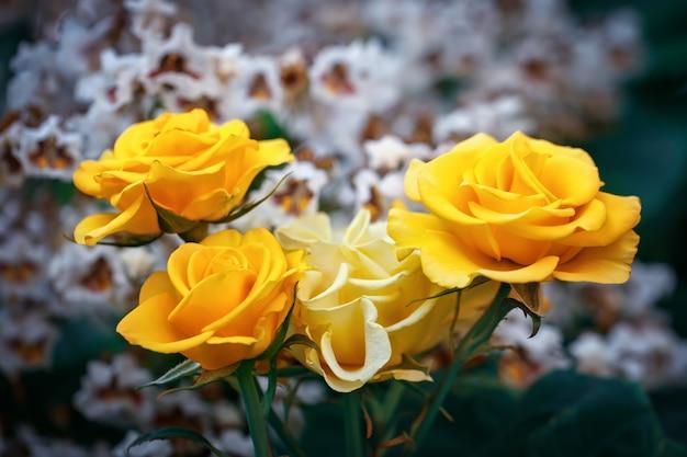 Schöner sommergarten mit blühenden rosen.