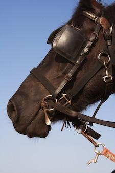 Schöner sommertag des pferdes im freien