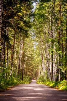 Schöner sommerwald mit verschiedenen bäumen