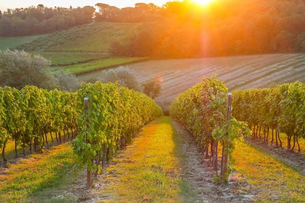 Schöner sonnenaufgang an den weinbergen in der nähe von faenza, italien.