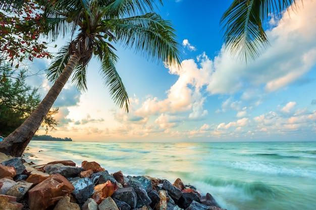 Schöner sonnenaufgang des frühen morgens über kokosnussbaum mit dem meer der horizont