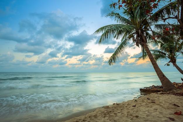 Schöner sonnenaufgang des frühen morgens über kokosnussbaum