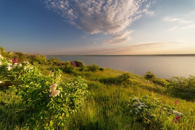 Schöner sonnenaufgang, sonnenuntergang am flussufer mit lila büschen im vordergrund und schönem, grünem, jungem gras