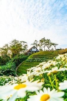 Schöner sonnenaufganghimmel mit garten auf berg bei huai nam dang national park