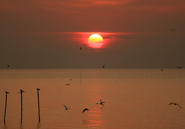 Schöner sonnenaufganghimmel über dem golf von thailand mit dem schattenbild vieler frühen vögel