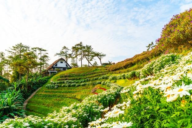 Schöner sonnenaufgangshimmel mit garten auf berg am huai nam dang nationalpark