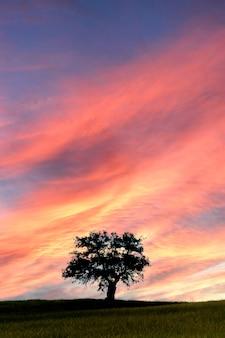 Schöner sonnenuntergang auf der wiese mit einem erstaunlichen himmel