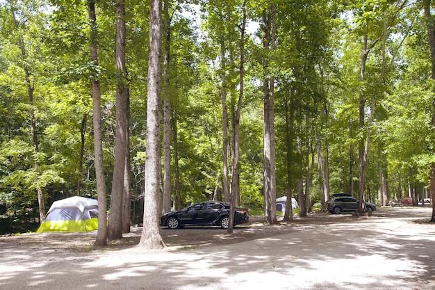 Schöner sonniger morgen auf einem campingplatz im nationalpark. campingurlaub im sommer.