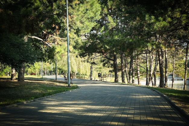 Schöner stadtpark am hellen sonnigen morgen