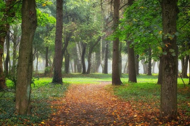 Schöner stadtpark in den herbstbäumen und im weg