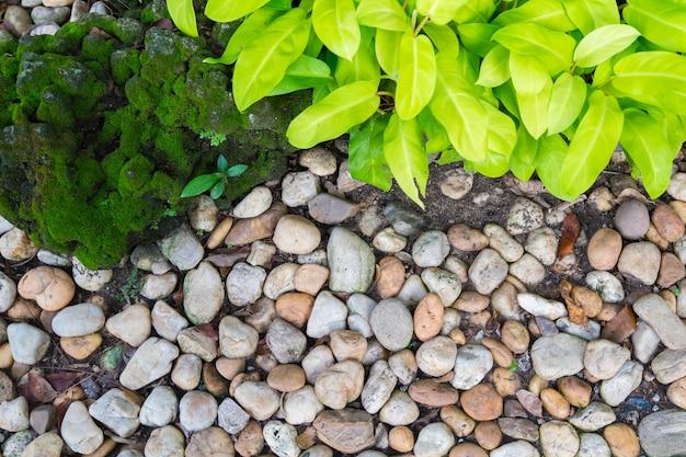 Schöner steingarten. grüner schmuck und stein bedeckt mit grünem moos.