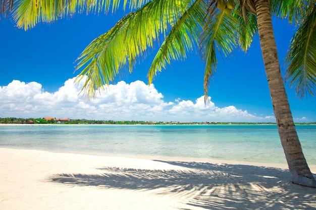 Schöner strand blick auf schönen tropischen strand mit palmen
