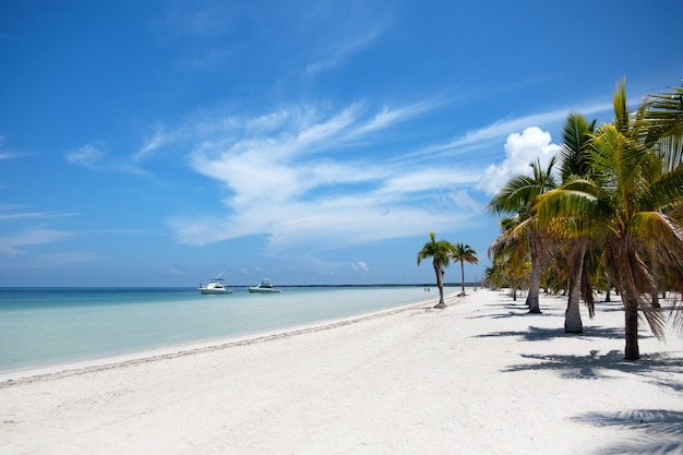 Schöner strand der insel cayo blanco in kuba
