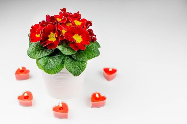 Schöner strauß frühlingsblumen und rote kerzen in form eines herzens auf weiß.