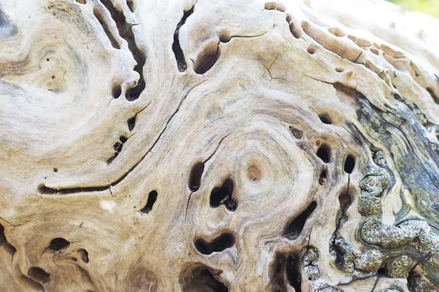 Schöner strukturierter alter baum. natürlicher grauer hintergrund mit platz für text