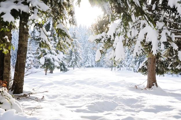 Schöner szenenbaum und -schnee des winters