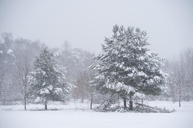 Schöner tannenbaum mit schnee auf winternaturhintergrund. winterlandschaft mit verschneiten bäumen und schneeflocken.