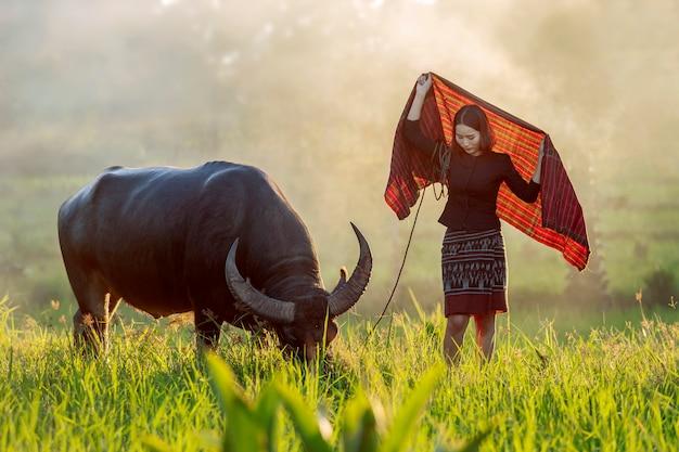 Schöner thailändischer landwirt, der ihren büffel betrachtet