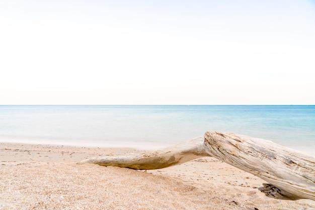 Schöner trockener baum am strand mit glatter welle durch lange verschlusszeit