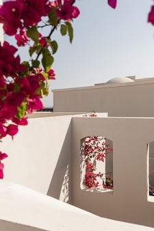 Schöner tropischer pflanzenbaum mit roten blumen im beigen gebäudefenster mit sonnenlichtschatten. Premium Fotos