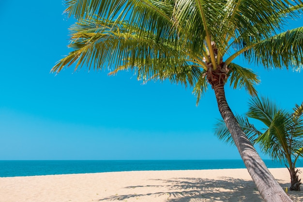 Schöner tropischer strand mit kokosnusspalme auf sandigem. sommer hintergrund konzept.