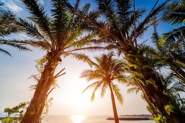 Schöner tropischer strand mit palmen.