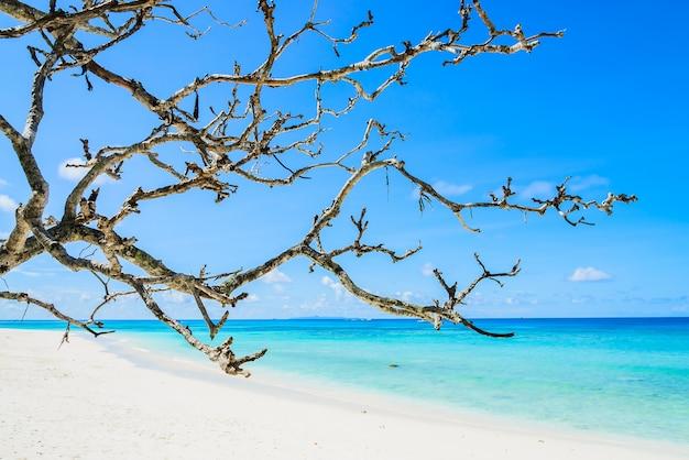 Schöner tropischer strand