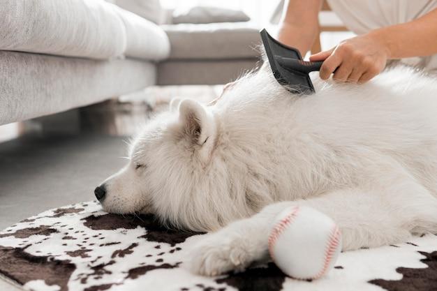 Schöner und flauschiger weißer hund
