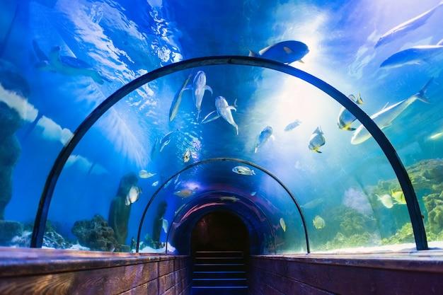 Schöner unterwassertunnel im ozeanarium