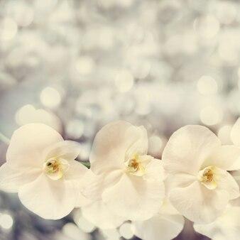 Schöner verschwommener hintergrund mit schönen weißen orchideenblumen. weina