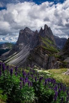 Schöner vertikaler schuss von blumen mit felsen daneben, naturpark puez-geisler, italien